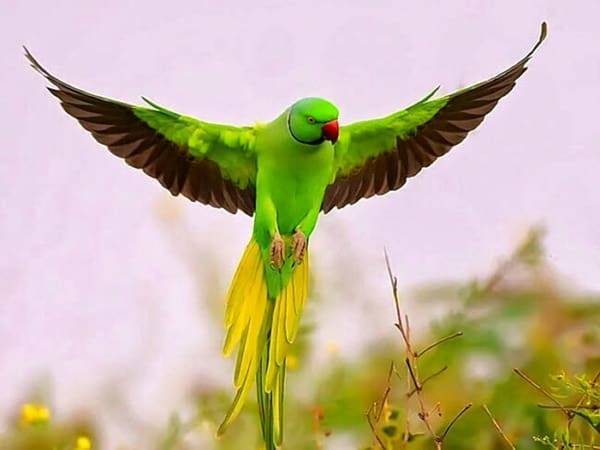 40-fantastic-pictures-of-flying-birds-33