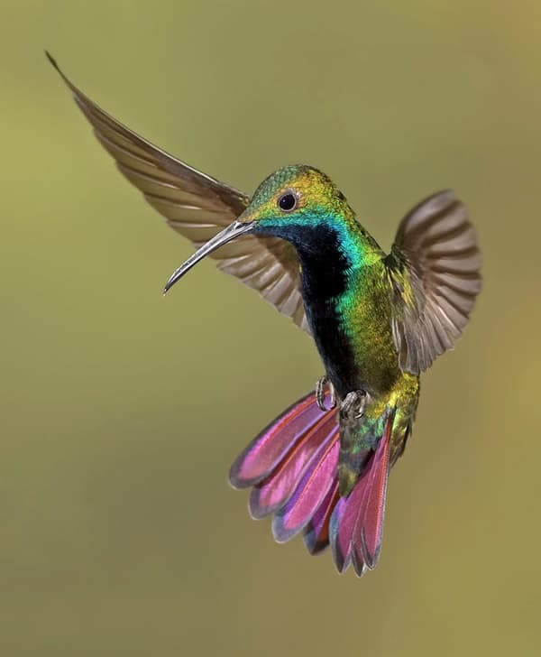 40-fantastic-pictures-of-flying-birds-4