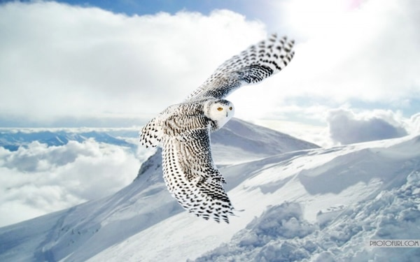 40-fantastic-pictures-of-flying-birds-40
