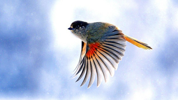 40-fantastic-pictures-of-flying-birds-6