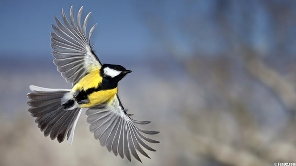 40-fantastic-pictures-of-flying-birds-8