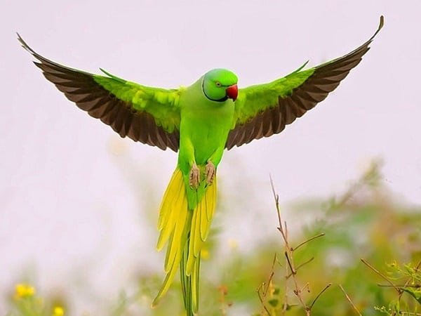 40-fantastic-pictures-of-flying-birds-9