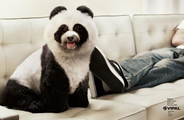 40-fluffy-pictures-of-puppies-that-looks-like-pandas-31