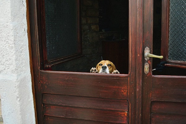 40-pictures-of-desperate-dogs-who-just-want-to-say-you-hi-12