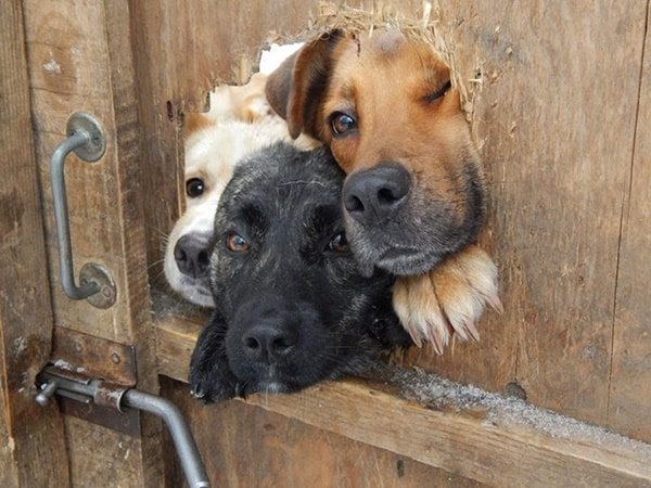 40-pictures-of-desperate-dogs-who-just-want-to-say-you-hi-24