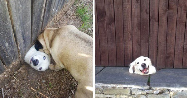 40-pictures-of-desperate-dogs-who-just-want-to-say-you-hi-4