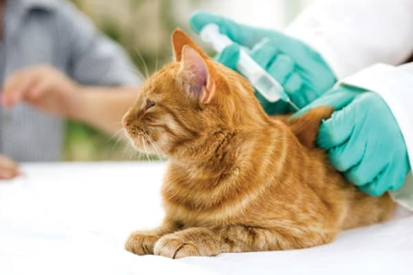 cats-and-dogs-vaccination-schedule-to-keep-your-pet-healthy-7