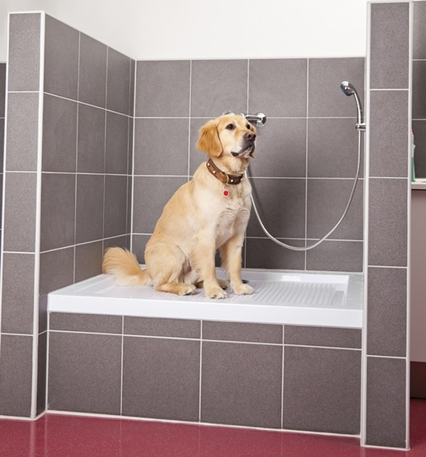 great-changes-in-your-house-that-your-dog-will-feel-comfortable-with-9