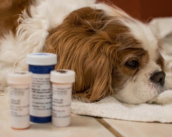 how-to-give-your-cat-or-dog-a-pill-2
