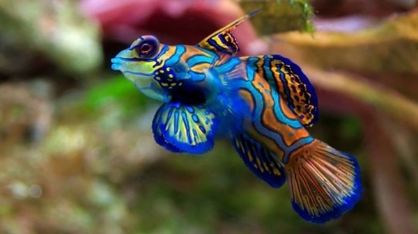 40-naturally-ocurring-blue-colored-animals-13