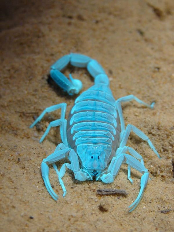 40-naturally-ocurring-blue-colored-animals-17
