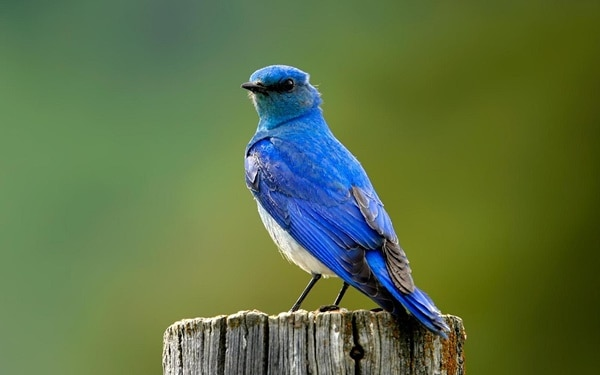 40-naturally-ocurring-blue-colored-animals-20