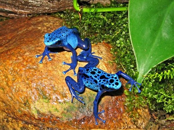 40-naturally-ocurring-blue-colored-animals-23