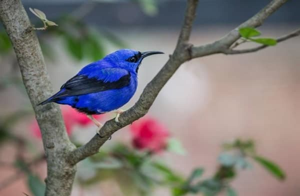 40-naturally-ocurring-blue-colored-animals-34