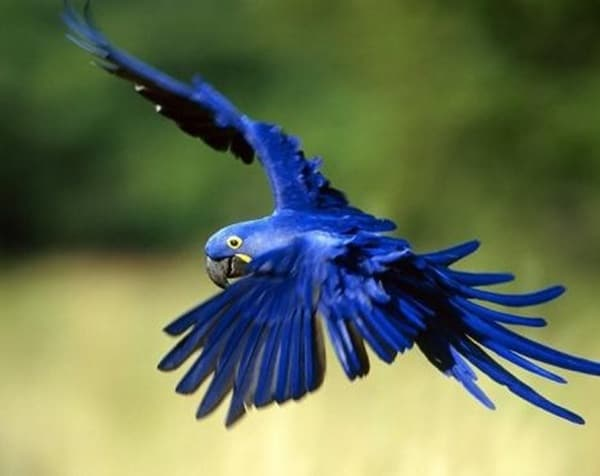 40-naturally-ocurring-blue-colored-animals-4