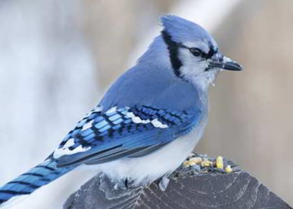 40-naturally-ocurring-blue-colored-animals-40