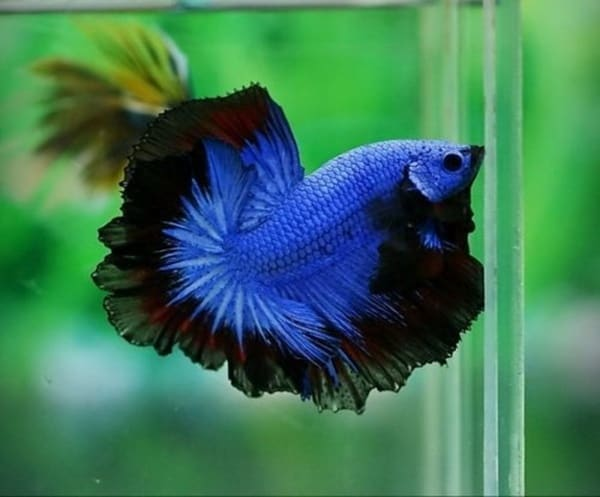 40-naturally-ocurring-blue-colored-animals-5