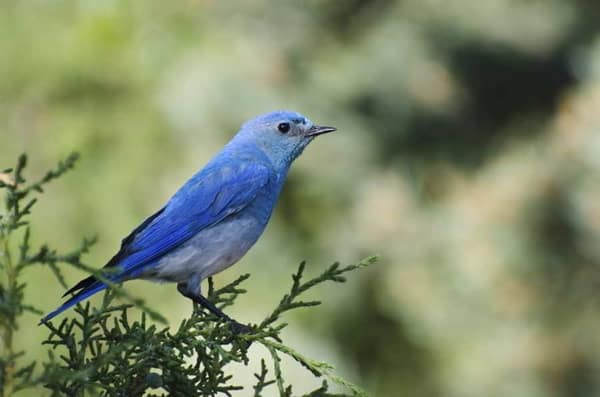 40-naturally-ocurring-blue-colored-animals-7