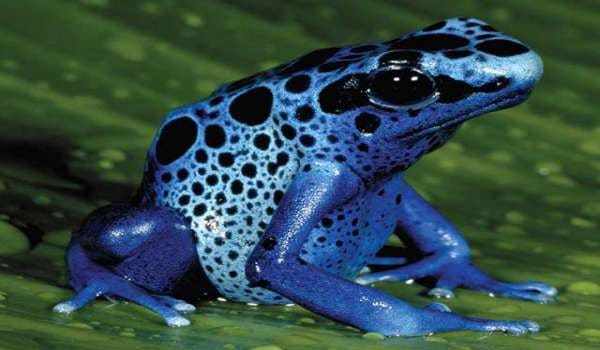 40-naturally-ocurring-blue-colored-animals-8