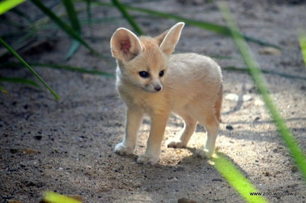 5-exotic-small-size-pets-for-kids-2
