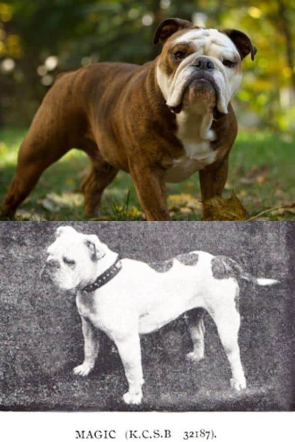How  Years Of Breeding Changed These Popular Dog Breeds