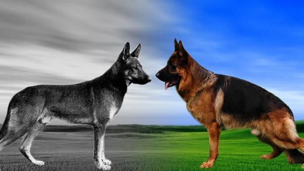 Different Medium Sized Dog Breeds