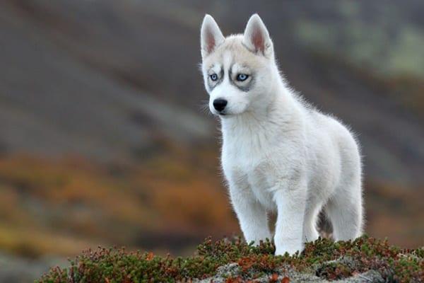 Most dangerous dog breeds