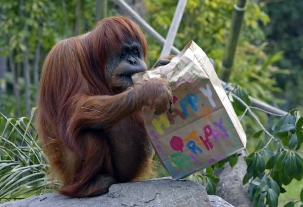 pictures of zookeepers celebrating birthdays of zoo animals 2