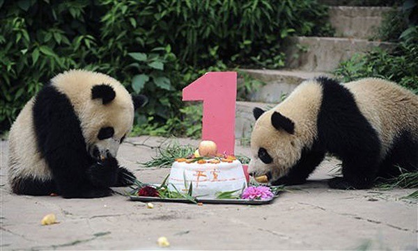 pictures of zookeepers celebrating birthdays of zoo animals 28