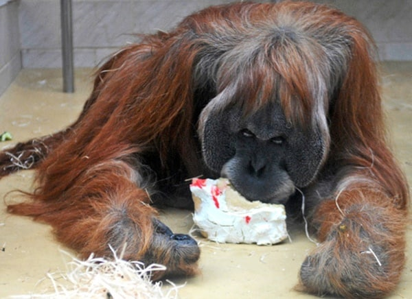 pictures of zookeepers celebrating birthdays of zoo animals 29