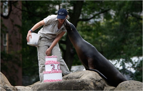 pictures of zookeepers celebrating birthdays of zoo animals 33