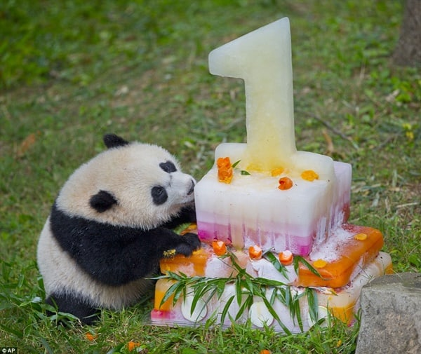 pictures of zookeepers celebrating birthdays of zoo animals 38