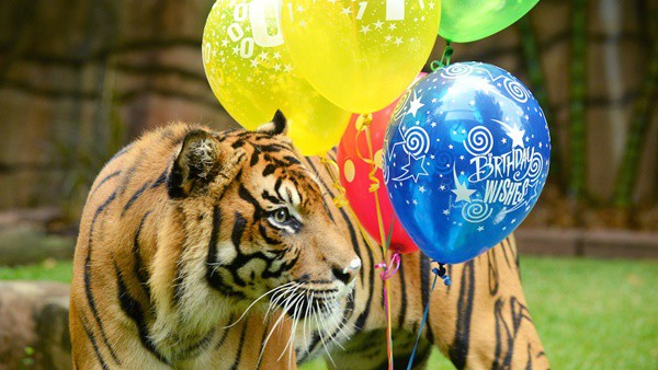 pictures of zookeepers celebrating birthdays of zoo animals 9
