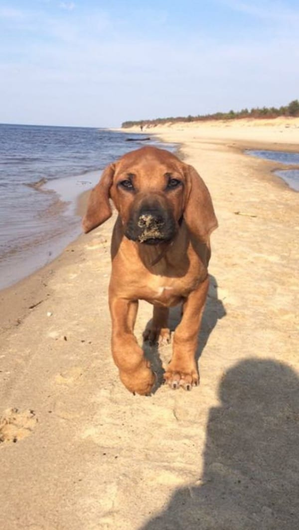 Beautiful Hound Puppies Pictures An Interesting Take On
