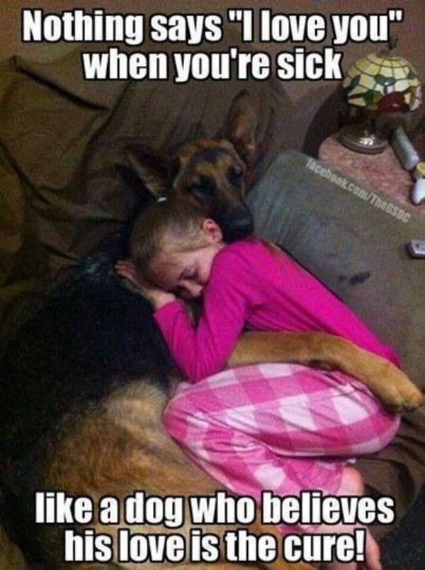 Can Dogs Really Understand You Or Is It Learned Understanding