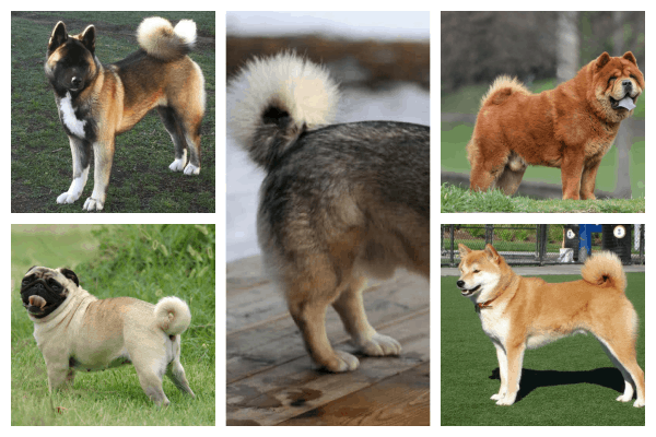 dog tail indicates breed  what is your dog tail shape