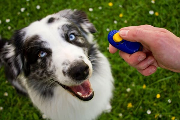 Important Dog Tools Every Owner Must Have