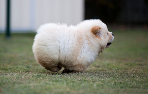Fluffy and Cute Animal Pictures