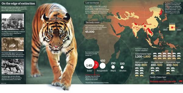 knowledgeful-animal-infographics