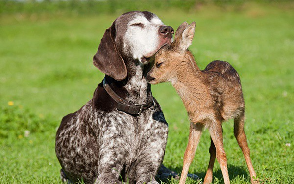Pictures-of-Pets-with-Their-Animal-Friends