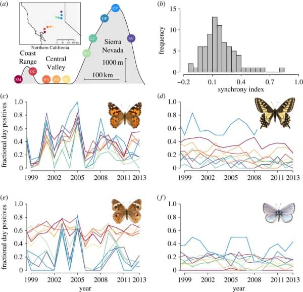 Why-Are-Butterflies-Important-for-the-Environment