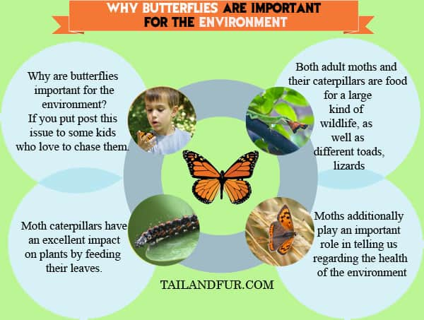 Why-Butterflies-Are-Important-For-The-Environment