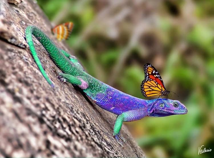 beautiful colored animals (7)