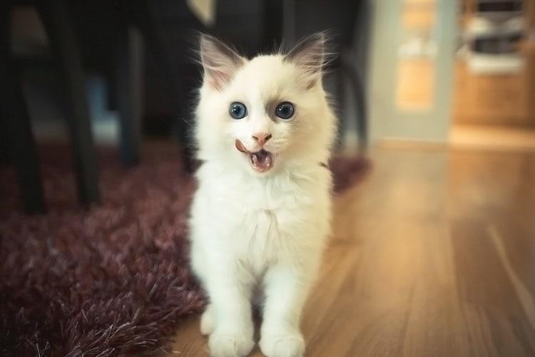 cute baby animals (1)