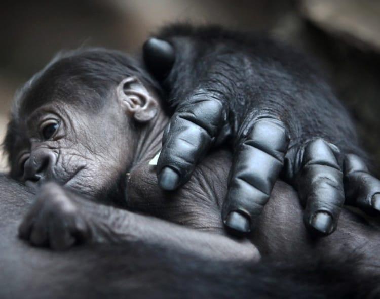 cute baby animals (12)