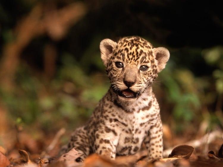 cute baby animals (13)