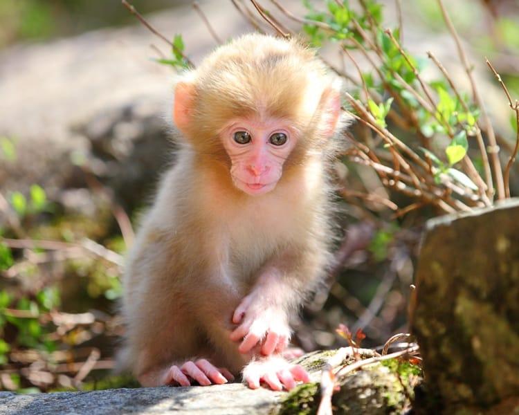 cute baby animals (3)