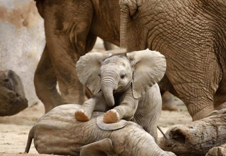 cute baby animals (6)