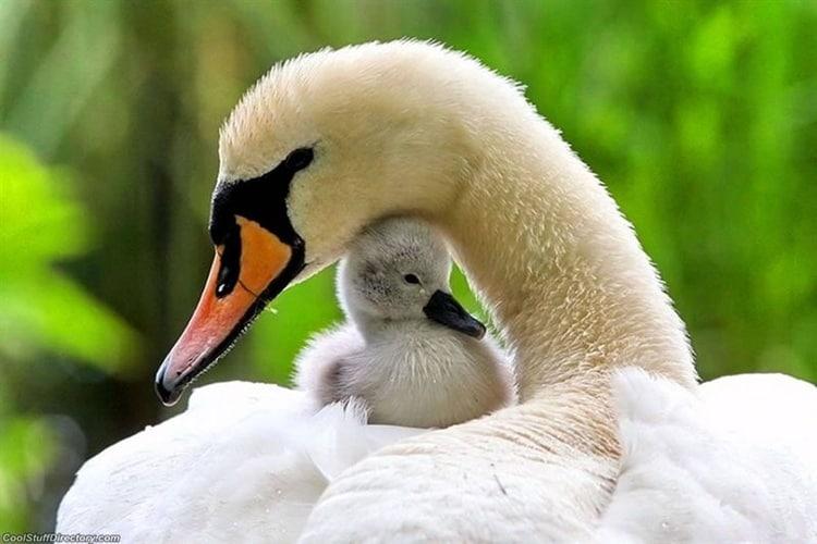 cute baby animals (8)
