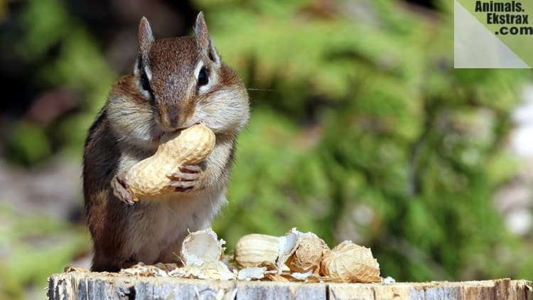 Squirrel Eating Food Images